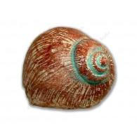 "Cache ""Snail"""
