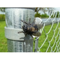 "Cache ""Magnetic insect"" - Horsefly"